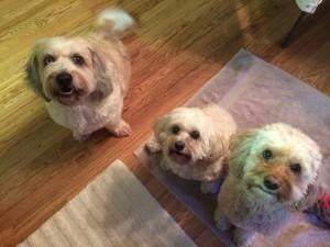 Monte, Taffy & Starbuck